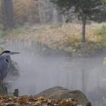 heron etang