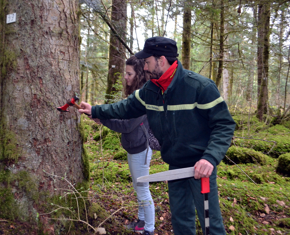 Office national des for ts festival nature - Office national des forets ...