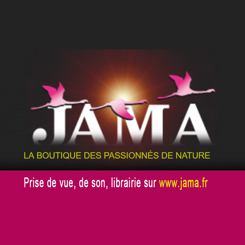 logo-jama-site