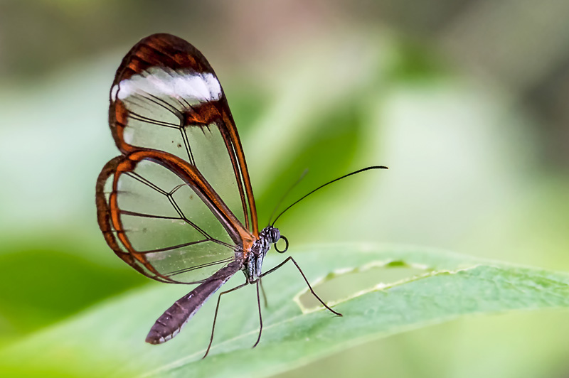 DUMANGIN Jacky Greta Oto La grange aux papillons NIKON D500 85 mm F4