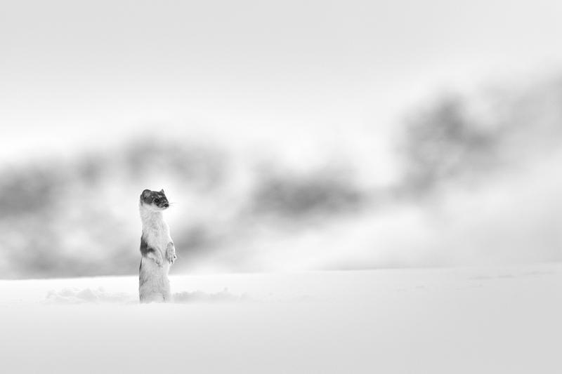 GIRARD Denis Son-terrain-de-jeux Canon EOS 7D Mark II 400 mm F 6.3