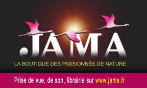 LOGO JAMA 300